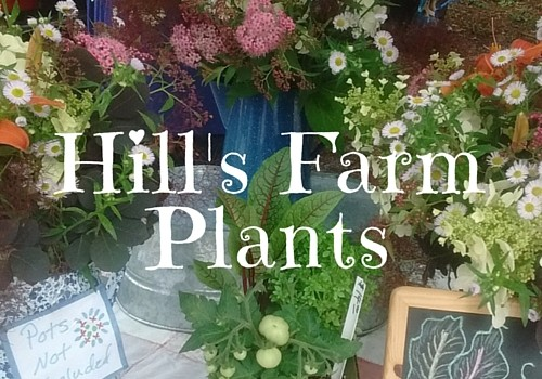 Hill's Farm Plants