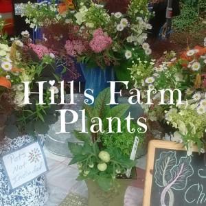 Hill's Farm Plants