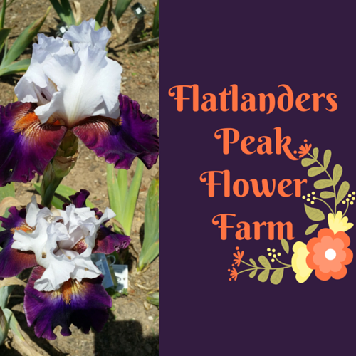 Flatlanders Peak Flower Farm